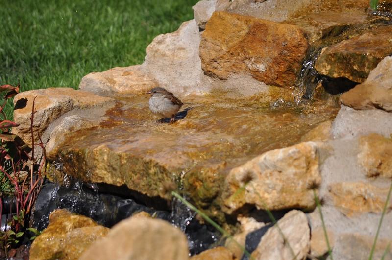 Création d'un bassin - Page 2 Dsc_0519