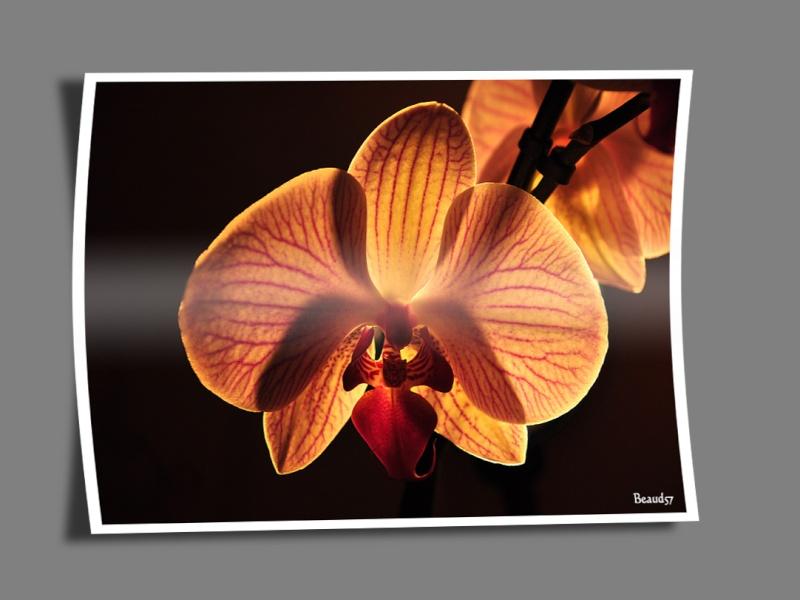 Quelques scripts Photoshop à votre disposition Fleur110