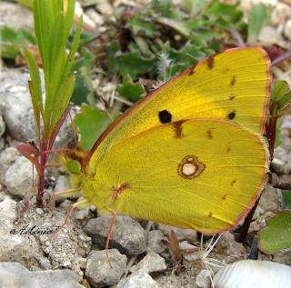Papillons été 2012 2-08-212
