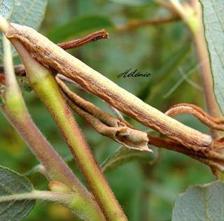 Les chenilles deviendront des papillons ... 23-09-10