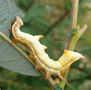 Les chenilles deviendront des papillons ... 23-09-11