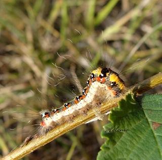 Les chenilles deviendront des papillons ... 23-09-12