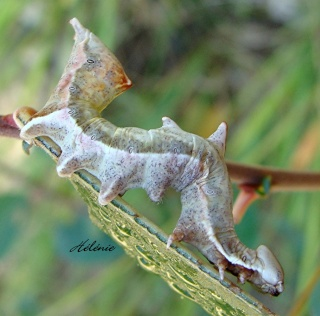 Les chenilles deviendront des papillons ... 28-09-11