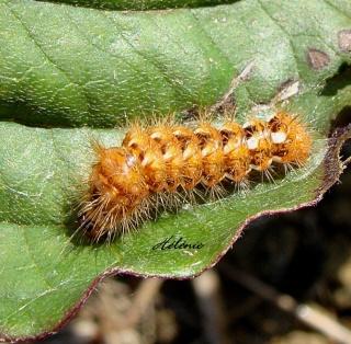 Les chenilles deviendront des papillons ... 28-09-12