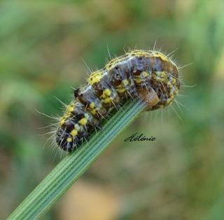 Les chenilles deviendront des papillons ... 28-09-14