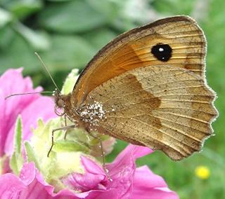 Papillons 2_67110