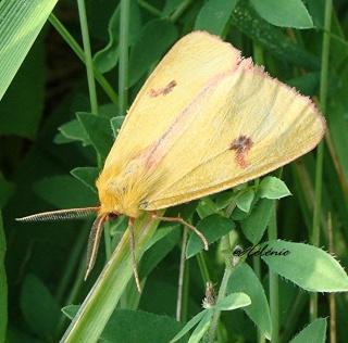 Papillons été 2012 3-08-211