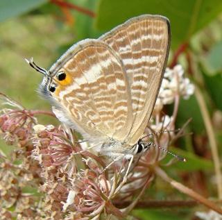 Papillons été 2012 3-08-212