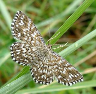 Papillons été 2012 3-08-213