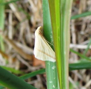 Papillons été 2012 4-08-212