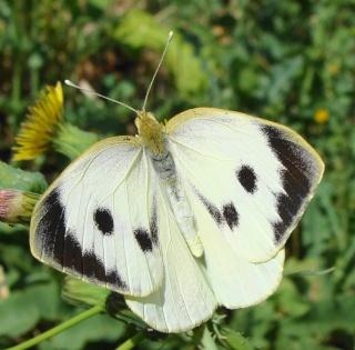 Papillons été 2012 4-08-213