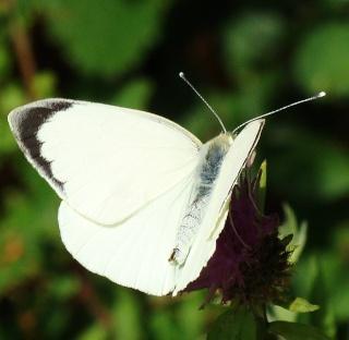 Papillons été 2012 4-08-214