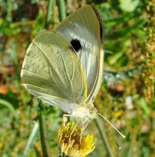Papillons été 2012 4-08-215