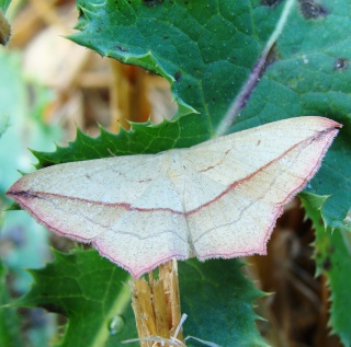 Papillons été 2012 4-08-217