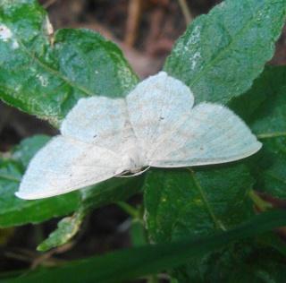 Papillons été 2012 Dsc02915