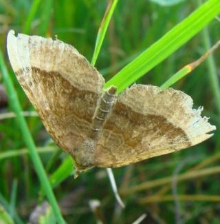 Papillons été 2012 Dsc02916