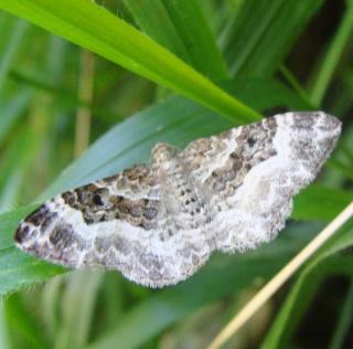 Papillons été 2012 Dsc02917