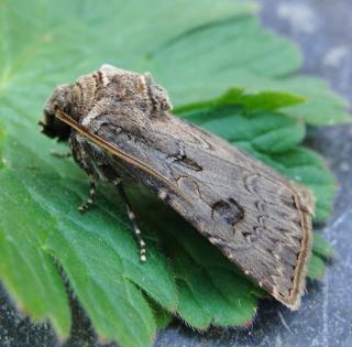 Papillons été 2012 Dsc03112