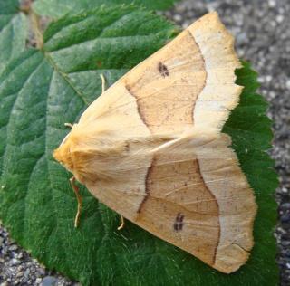 Papillons été 2012 Dsc03115