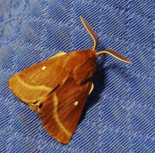 Papillons été 2012 Dsc03116
