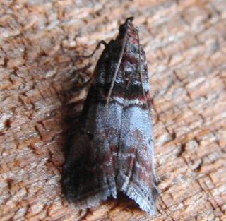 Papillons été 2012 Dsc03119