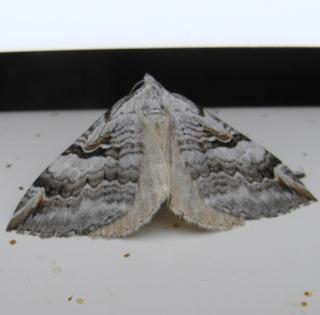Papillons été 2012 Dsc03120