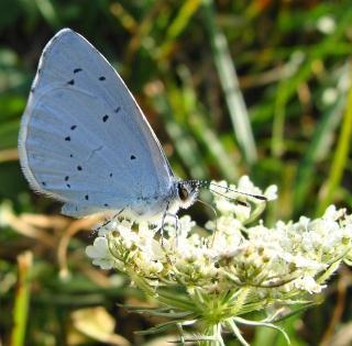 Papillons été 2012 Dsc03121