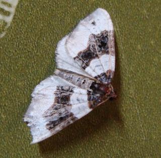 Papillons été 2012 Dsc03122