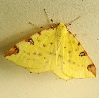 Papillons été 2012 Dsc03127