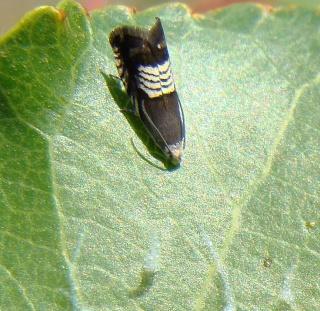 Papillons été 2012 Dsc03212
