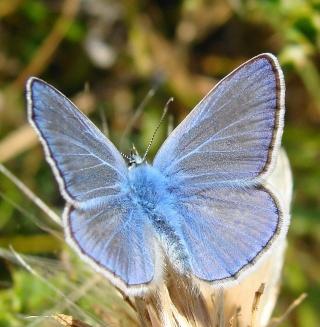 Papillons été 2012 Dsc03213