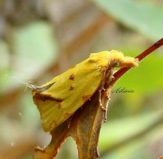 Papillons été 2012 Dsc03613