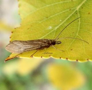 Papillons été 2012 Dsc03614