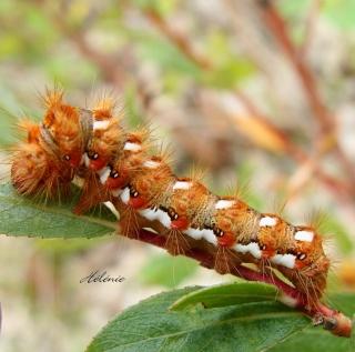 Les chenilles deviendront des papillons ... Dsc03616