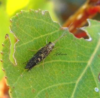 Papillons été 2012 Dsc03711