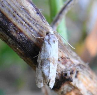 Papillons été 2012 Dsc03712