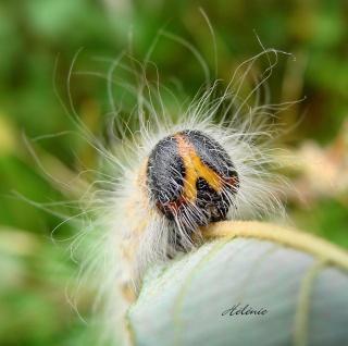 Les chenilles deviendront des papillons ... Dsc03713
