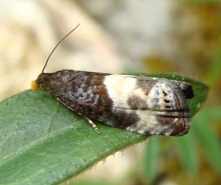 Papillons Dsc05110