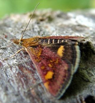 Papillons Dsc05411