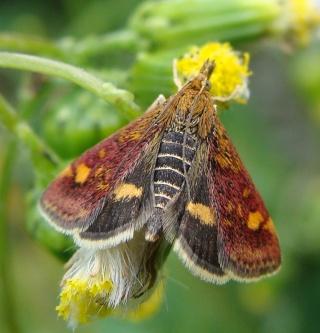 Papillons Dsc05412