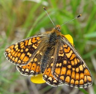 Papillons Dsc06412