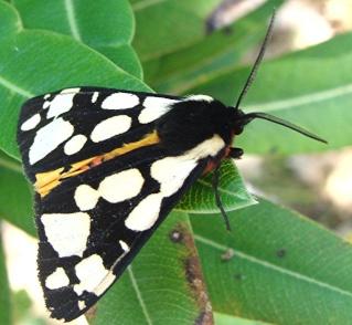 Papillons Dsc07810