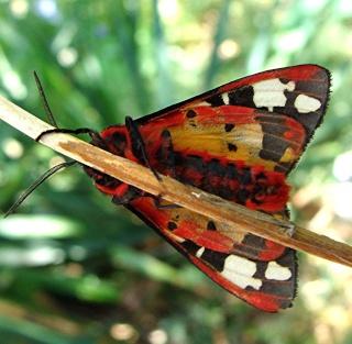 Papillons Dsc07811