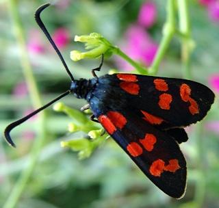 Papillons un peu plus insolites Dsc08810