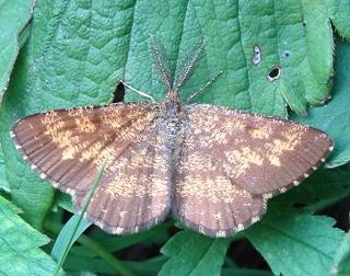 Papillons un peu plus insolites Dsc09510