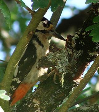 Les oiseaux du jardin (28 espèces d'oiseaux observées pour vous) Dsc09912