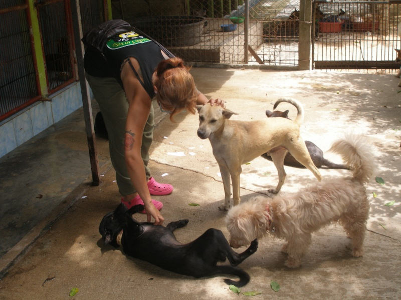 Dogs and cats rescue center a Koh Samui P1010138