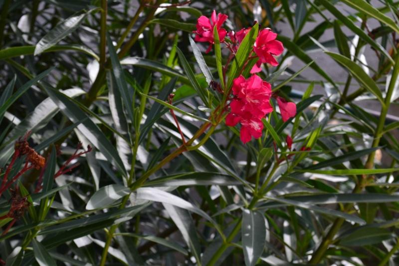 Floraisons du mois d'Août - Page 10 15_aoy15