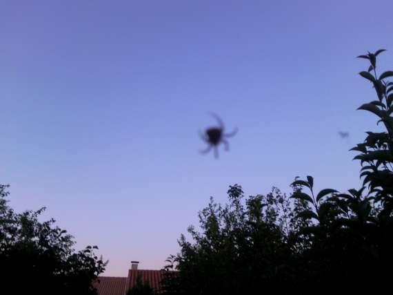 Une araignée du soir 30_jui10