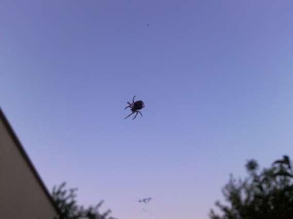 Une araignée du soir 30_jui11